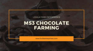 The MS3 Chocolate Farming Process